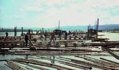 Fetsund lenser 1967. Arbeiderne stod på stålbruer og dro tømmeret nedover mot buntemaskinene. Foto: Gabriel Westeren<br>