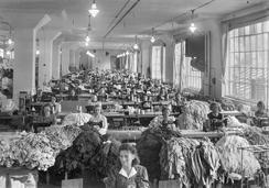 Interiør fra sysalen ved Janus Fabrikker, ca. 1930-39.Foto: Atelier KK / Universitetsbiblioteket i Bergen<br>