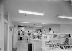 Fleischers laboratorium i Bergen, ca. 1970Foto: Norvin reklamefoto / Universitetsbiblioteket i Bergens billedsamling<br>